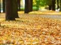 autumn park,autumn park